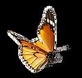 Schmetterling - Seerosengarten-Balingen
