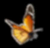 Orange Butterfly-Seerosengarten-Balingen