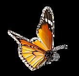 Schmetterling Freizeitpark Seerosengarten Balingen