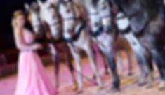 Circus Probst - Pferde