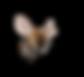 Bee-Seerosengarten-Balingen.png