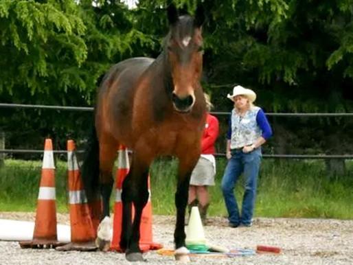 Salta Horses