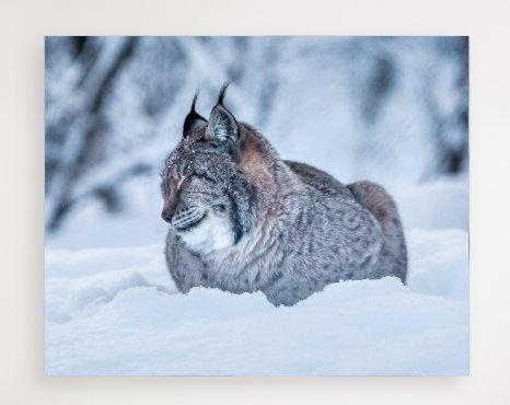 Norsk Lynx 3 IR Varmepanel Veggbilde Panelovn