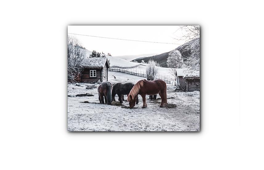 Islandshester på gård i Sollia i vintertid IR Varmepanel Veggbilde Panelovn