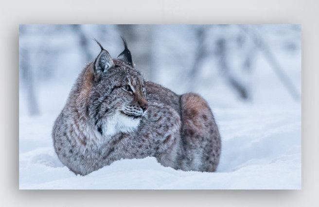 Norsk Lynx 2 IR Varmepanel Veggbilde Panelovn