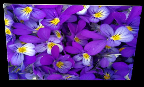 IR Varmepanel Violets