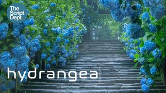 Hydrangea_Thumbnail.jpg