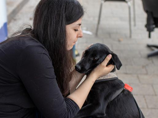 כלבים וחתולים בתקופת קורונה