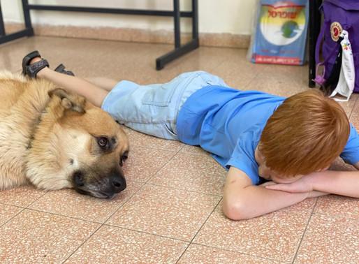 10 סיבות טובות לפעילות טיפולית עם כלבים