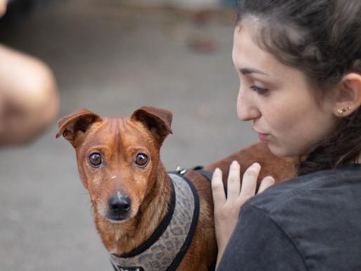 כלב חדש בבית: הוראות הפעלה