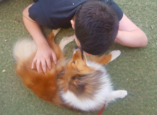 כלבנות טיפולית - הצצה ליום עבודה עם נוער על הרצף האוטיסטי