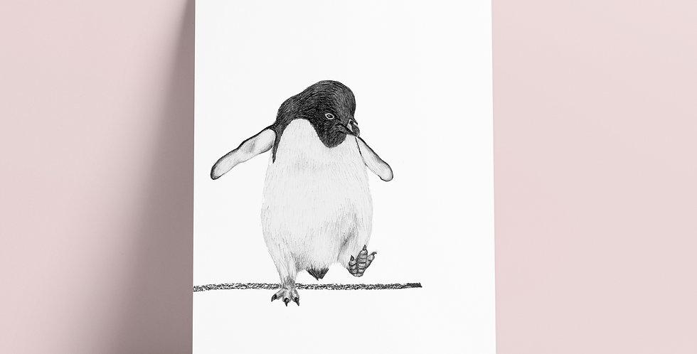 Kort: Grå pingvin
