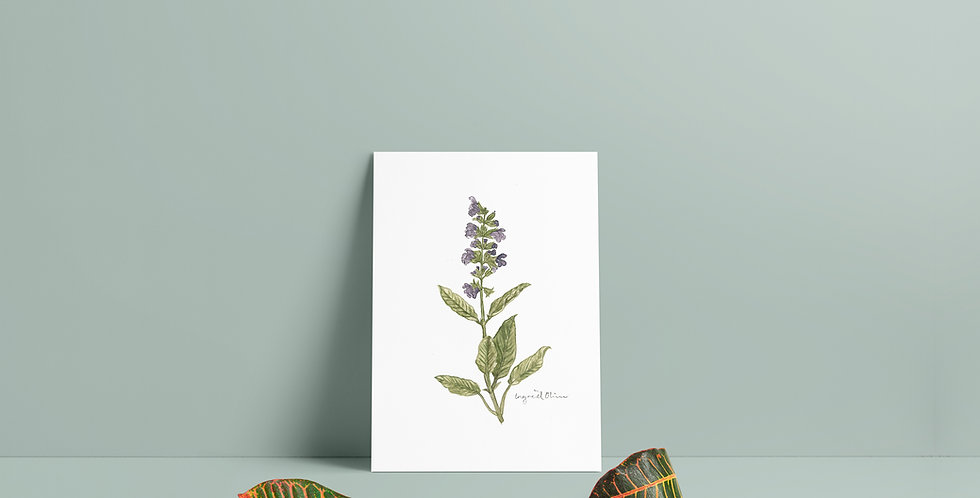 Plakat: Lavendel