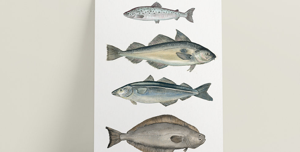 Kort: Fire Fisker