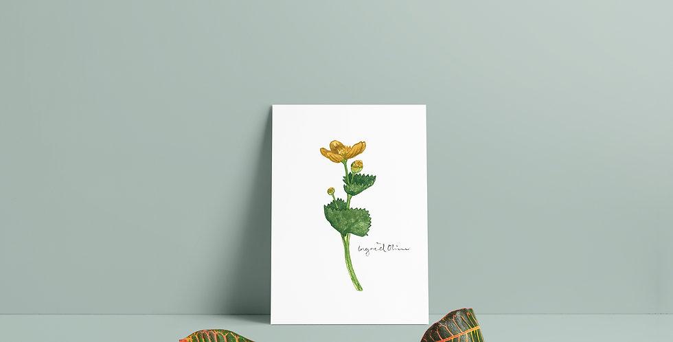 Plakat: Smørblomst