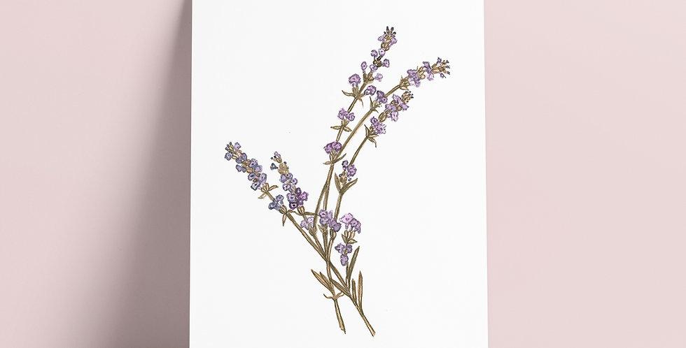 Kort: Botanisk