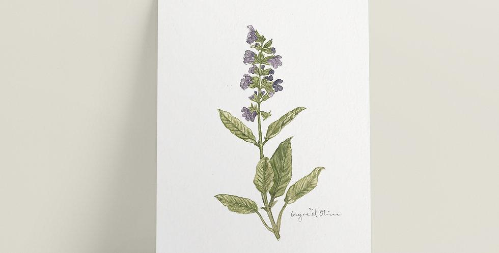 Kort: Lavendel