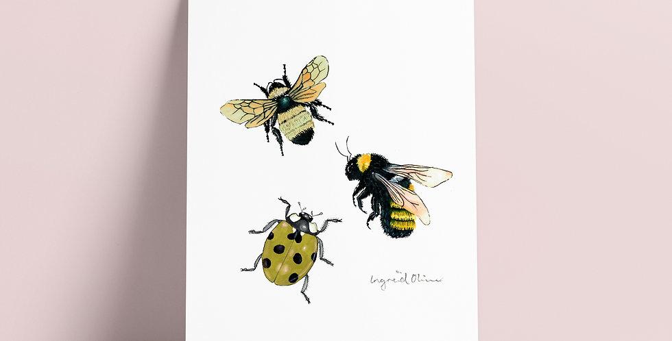 Kort: Insekter