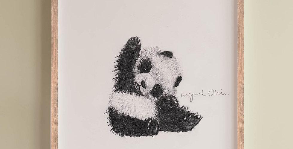 Plakat: Panda