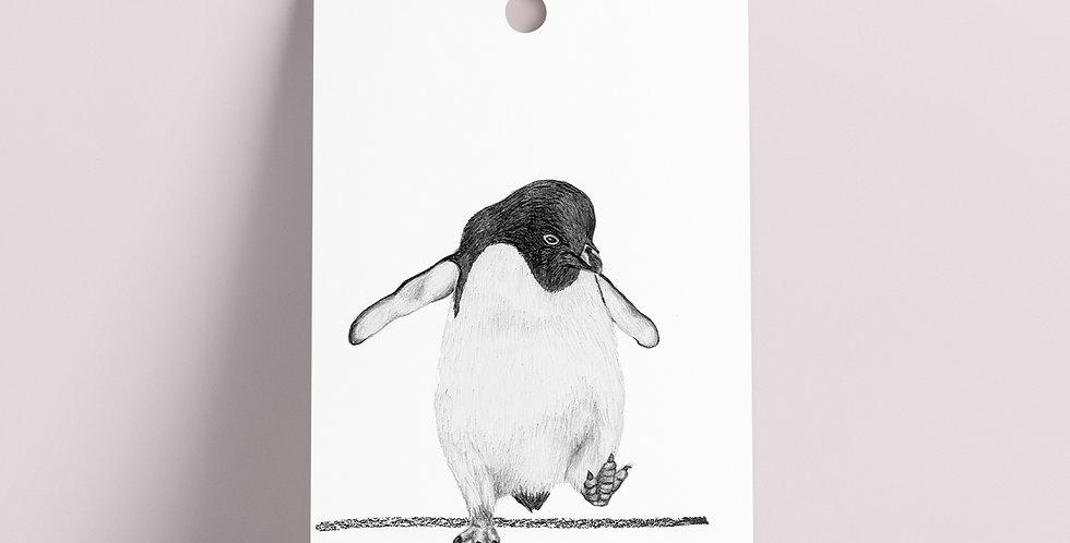 Gavelapp: Grå Pingvin