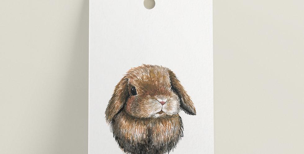 Gavelapp: Kanin