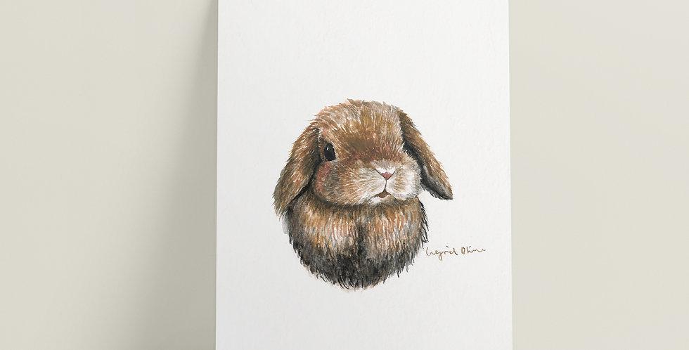 Kort: Kanin
