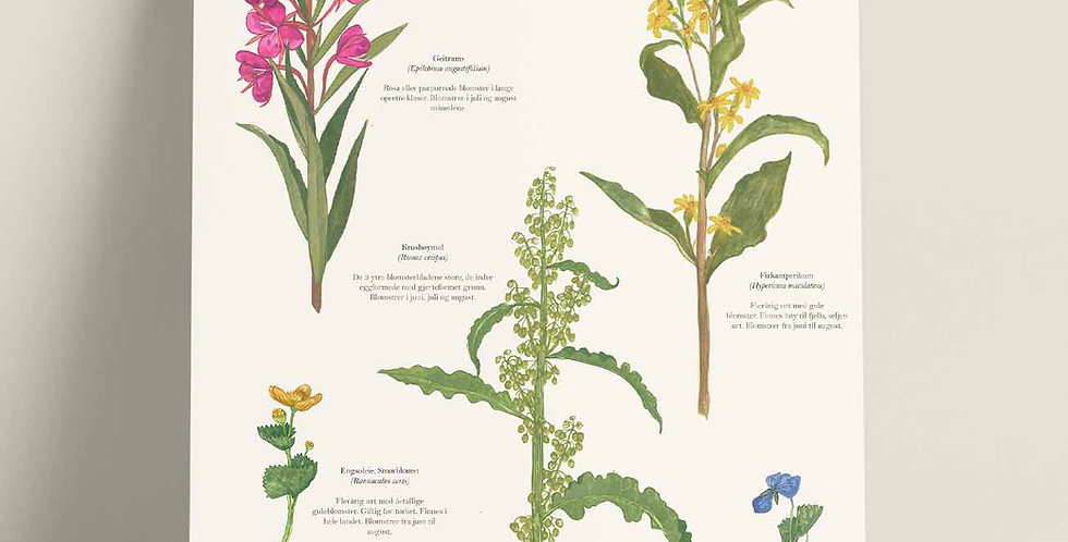 Plakat: Flora