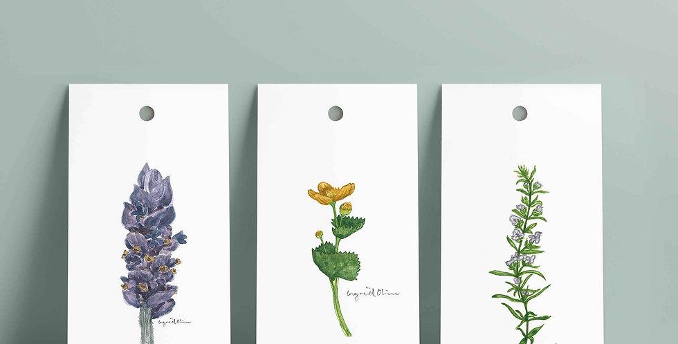 6 stk gavelapper: serien botanisk