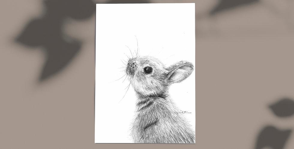 Plakat: Harepus
