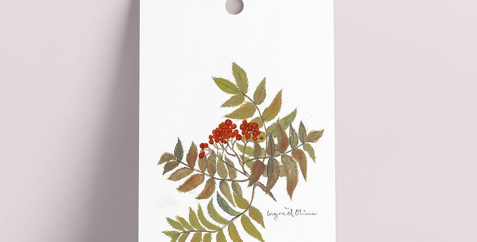 Gavelapp: Rognebær