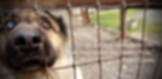 Sanctuary dogs