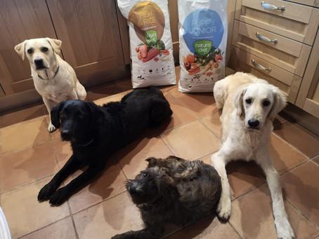 La alimentación de nuestros perros