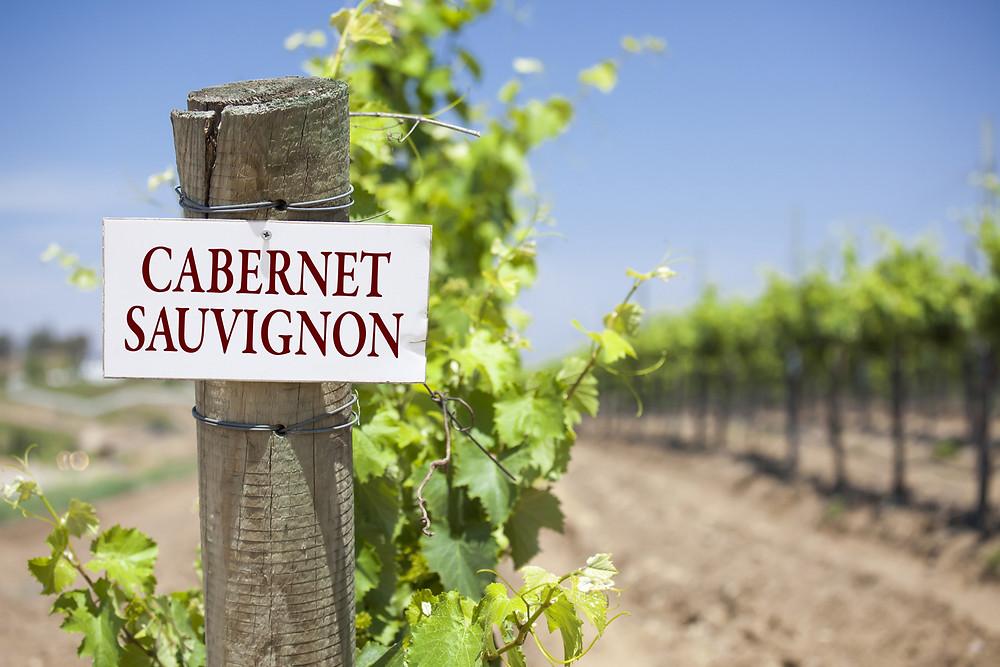 Día Mundial Del Cabernet Sauvignon