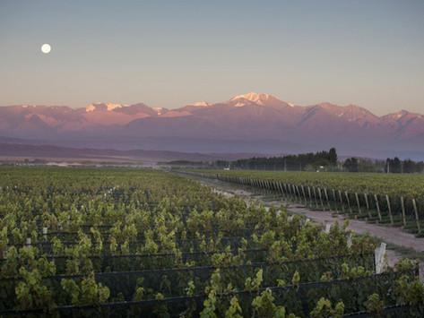 Mendoza: entre los destinos preferidos
