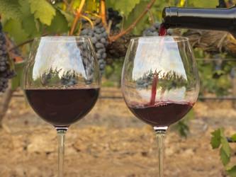 ¿Sabés qué es un Vino Orgánico?
