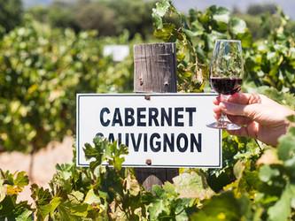 12 Cabernet Sauvignon imperdibles en todos los precios