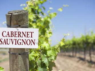 ¿Por qué se celebra el Día del Cabernet Sauvignon?
