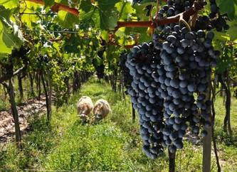Biodinámicos: Los vinos de la luna