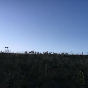 kozy na obzoru