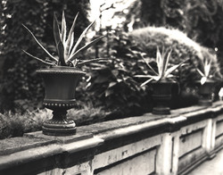 Seville Plant on Ledge