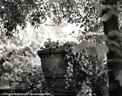 Rome.plant&pot