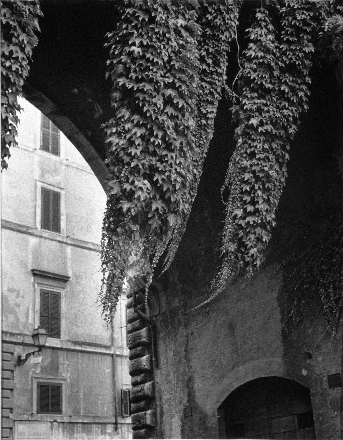 Rome, Via Guilia, Ivy. jpg