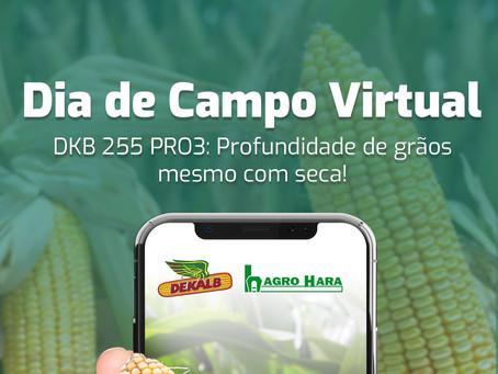 Dia de campo virtual Agro Hara Dekalb: conheça o DKB-255