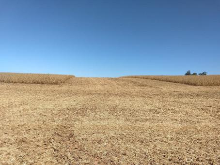 Manejo de correção da acidez do solo para altas produtividades