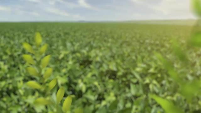 Técnicas de manejo biológico para sanidade no Milho: um caso de sucesso