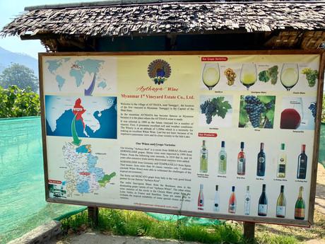 Entre vignes et théiers birmans