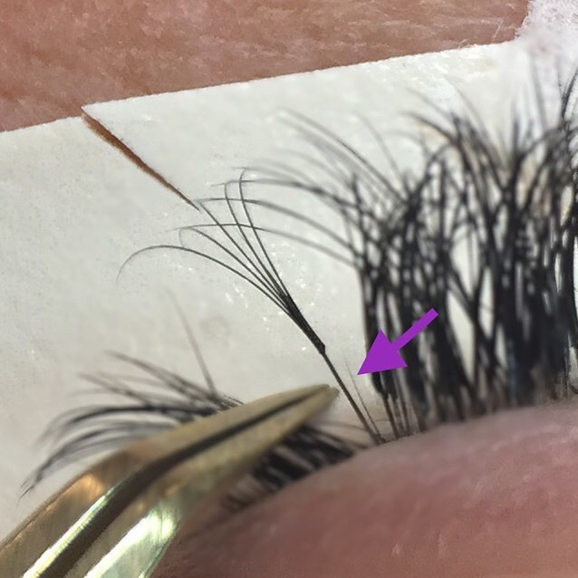 Volume Lashes and Growth Cycles