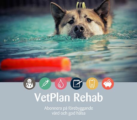 vetplanrehab.png