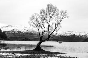 Wanaka Tree Black and White c-1.jpg