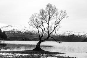 Wanaka Tree Black and White c-1.jpg